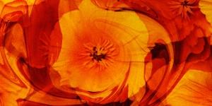 poppyflare